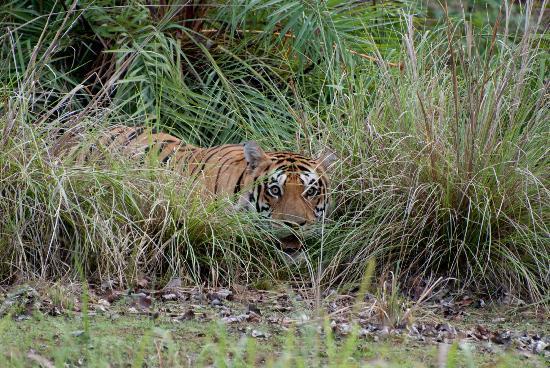Mandla, Hindistan: 1