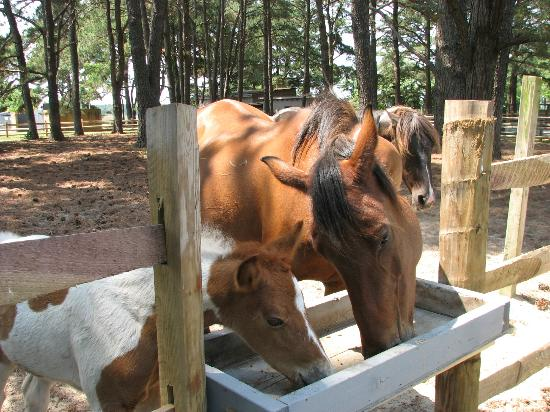 Refuge Inn: And their new foals too!