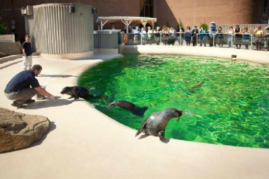 Shippagan, Canada: Seal feeding at the New Brunswick Aquarium and Marine Centre