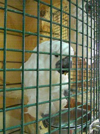 Emirates Park Zoo: Macaw