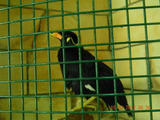 Emirates Park Zoo: Bird