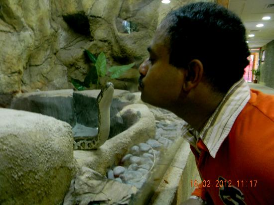 Emirates Park Zoo: Kissing Death