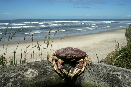 Tillicum Beach Park: A crab that washed ashore.. I set it (on the 'balcony' rail to scare my husband..)