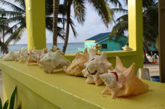 Tranquility Bay Resort: Conch shells on cabana 5