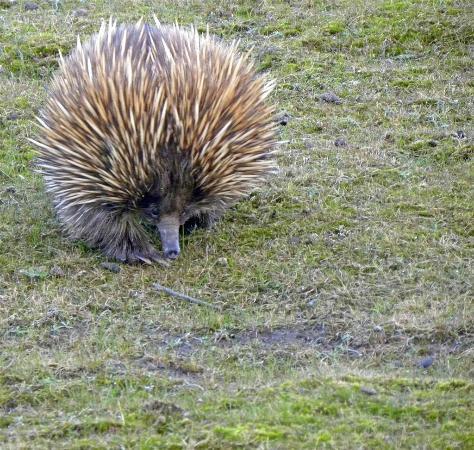 写真Hanson Bay Wildlife Sanctuary枚