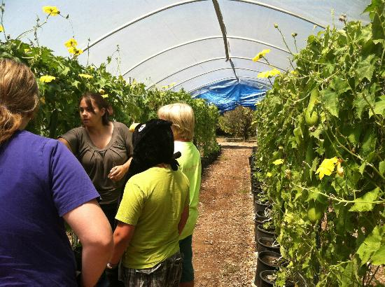 The Luffa Farm: Tour