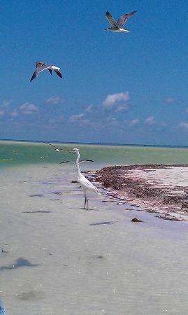Holbox Collection Day Tour: Passion Island Birds