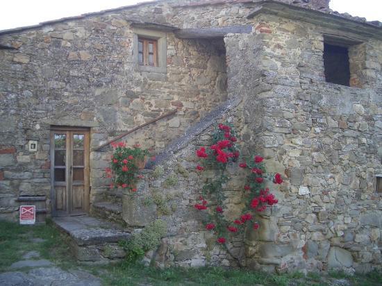 Castiglion Fibocchi, Italia: La Vialla Roses on Stones