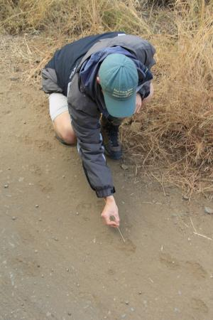 Rhino Post Safari Lodge: James checking leopard tracks.