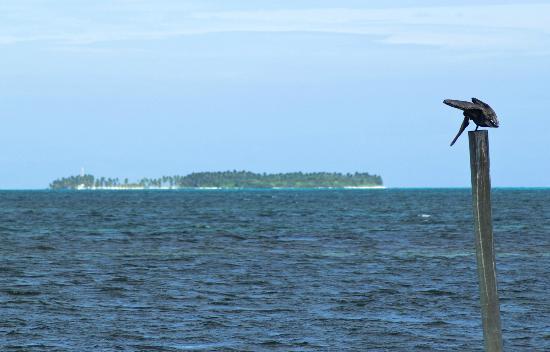 Huracan Diving: Pelican w/ Half Moon Caye in the background