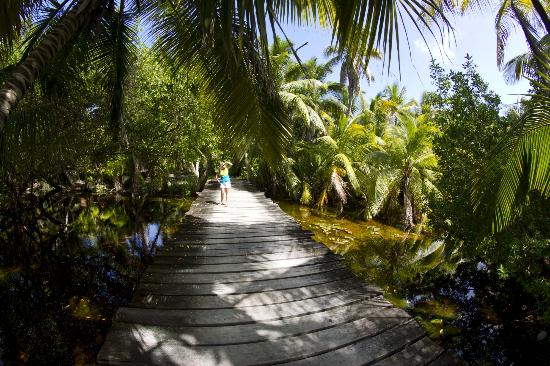 Huracan Diving: One of the paths on Long Caye
