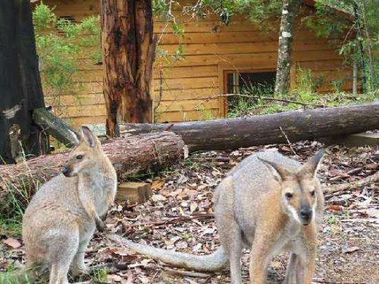 Bluegums Cabins: Hubby & Missus looking for hand out