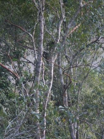 Mt Quincan Crater Retreat: Tree Kangaroos, Mum and Dad
