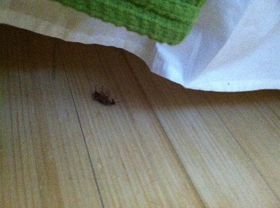 Greenview Hotel: Bug under bed