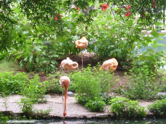Louisiana Purchase Gardens Zoo Monroe Omd Men