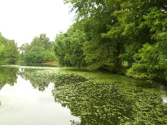 Scenery From The Boat Picture Of Louisiana Purchase Gardens Zoo Monroe Tripadvisor