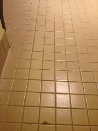 The Sutton Place Hotel Edmonton: broken tiles in the bathroom.. luxurious.