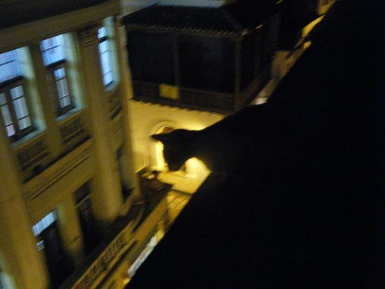 La Passion Hotel Lounge: Hotel cat