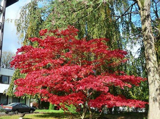 St. Georg: Vor dem Hotel, schöne Bepflanzung