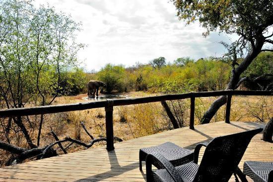 Motswiri Private Safari Lodge: view from room no. 3