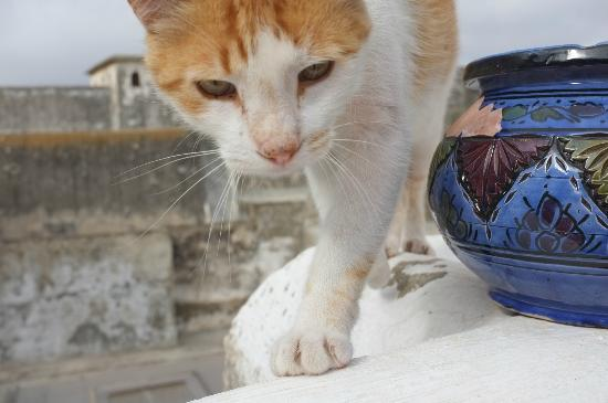 Riad Marlinea : Hotel Cat