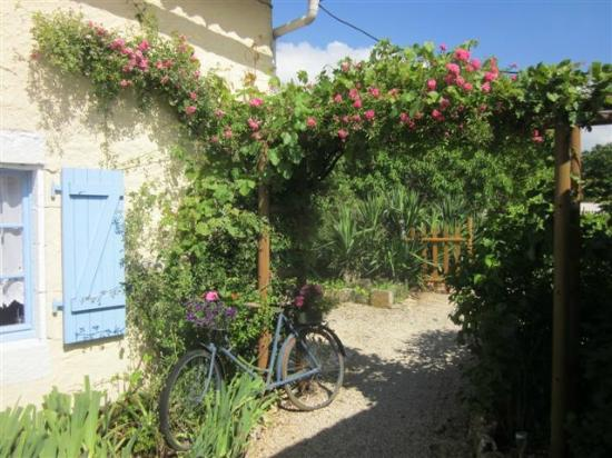 Camping Grande Vigne : PLANTS ON HELEN'S OLD BIKE OUTSIDE ONE OF GITES