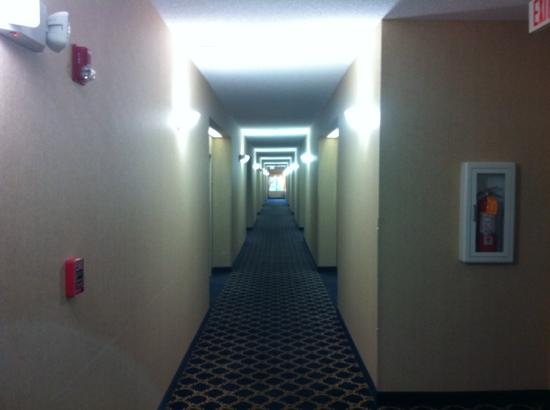 Quality Inn & Suites: Hallway is clean, clear, and fire extinguishers are up to date.