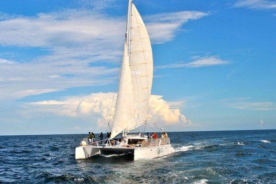 sailing the palm breeze catamaran