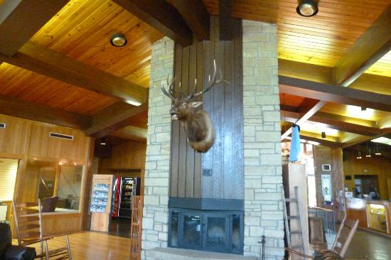 Buckhorn Lake State Resort: He was the biggest elk hunted recently.