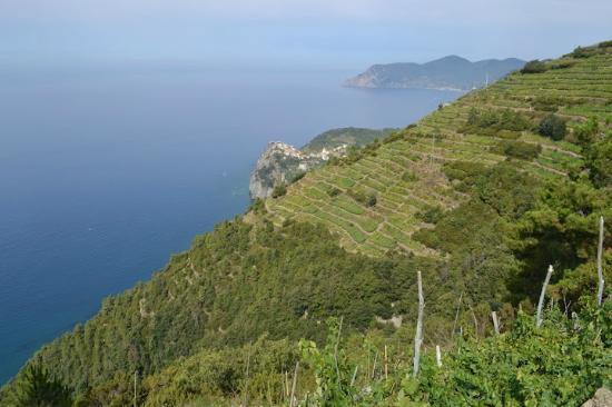 Hostel Cinque Terre: View in Vineyards above Manarola (looking to Corniglia)
