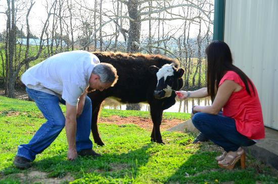 Southern Grace Bed and Breakfast: you can enjoy the farm if you wish