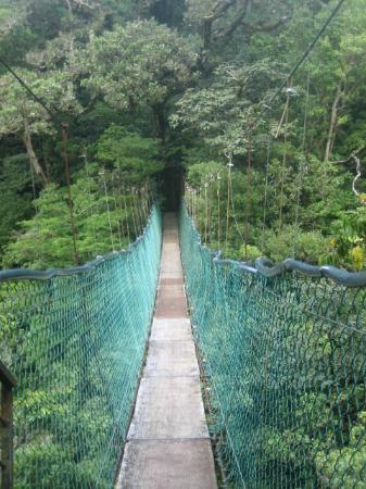Costa Rica For Everyone: hanging bridge