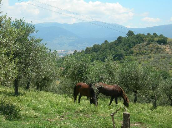 Agriturismo Rivoli: Two of their horses