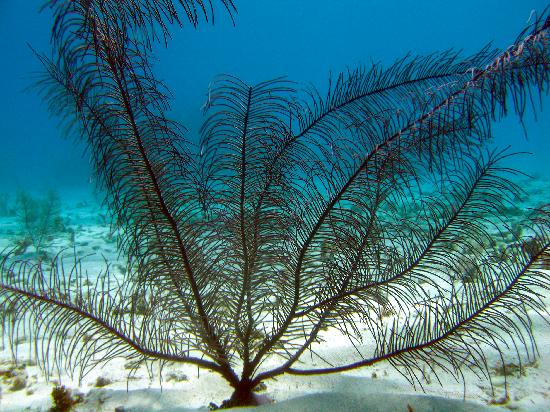 Off The Wall Dive Center & Resort : Gorgonian
