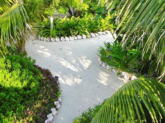 Off The Wall Dive Center & Resort : Conch shell lined paths