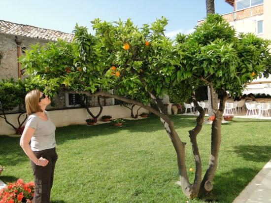 Ristorante kepos il piccolo giardino hotel taormina for Giardino piccolo