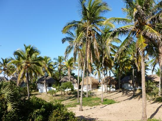 Barra Lodge: Chalets in the palm trees