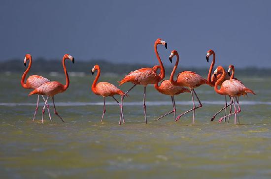 Rio Lagartos Adventures : Flamingos posing