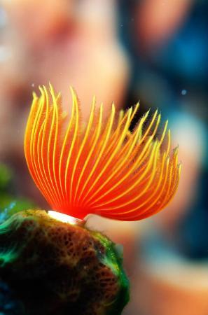 Saba Divers : beautiful colors in Saba marine Park