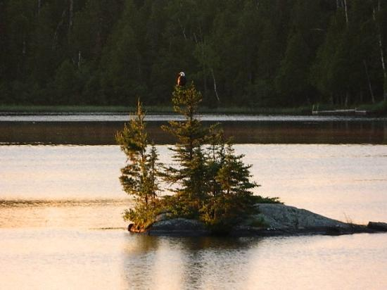 River Point Resort: Eagle at dawn, taken off the deck of the cabin