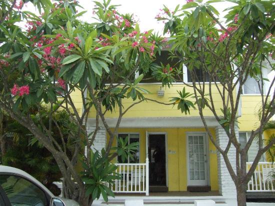 Beach Side Palms in June