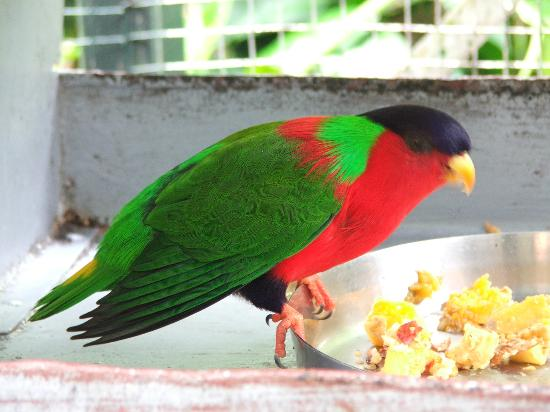 Kula Wild Adventure Park: beautiful birds