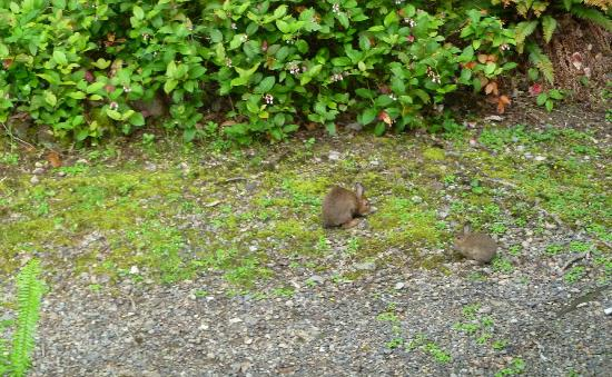 Lochaerie Resort : Bunnies came to our porch every morning