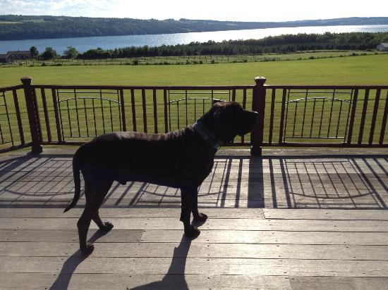 Pine Grove Bed & Breakfast: Boris admiring the view
