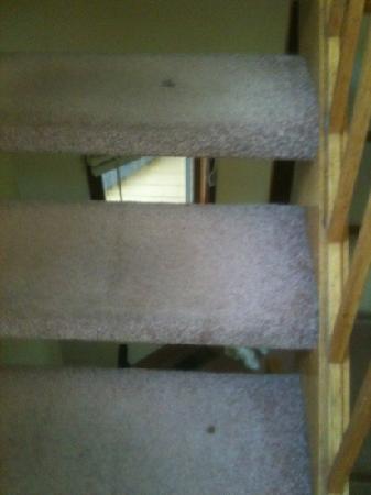 Shawnee River Village 2: spots on steps 