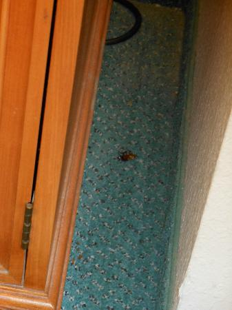 La Quinta Inn Albuquerque Northeast: dead cockroach in room