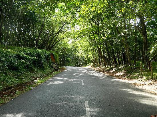 Kollam, India: On the way to Palaruvi
