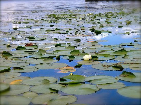 Washington Park Arboretum : pond