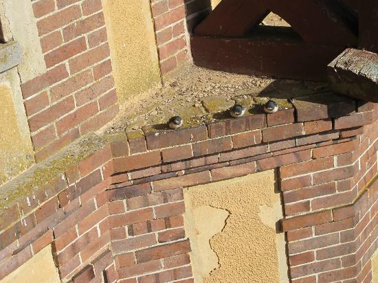 MANOIR LES PERDRIX : swallows