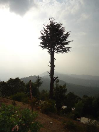Kmvn Tourist Rest House Mukteshwar: View of valley in the evening